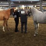 Backstage Italian Championship Appaloosa 2015