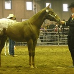 10 Months Fieracavalli Verona 2011 with Patricia Bambeck