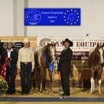 2009 European reserve champion yearling colts open