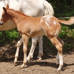 1 Month old - May 2012-