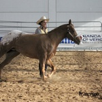 Fieracavalli Verona 2012-photo by Francesco Auriemma-