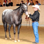 """2006 European championship """"Get of Sire"""" of King O'Dream with Marco Bertazzoni"""