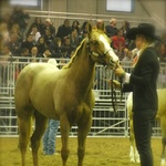 10 Months Fieracavalli Verona with Patricia Bambeck