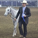 10 months old -Italian Champion weanling colts open-